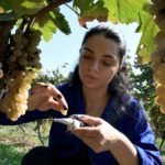 Ecological product innovation lab at the Moldovan Agri-food Business